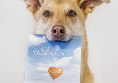 Hund mit Atemtagebuch - Tierarzt Kelkheim