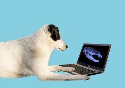 Hund mit Laptop - Tierarzt Kelkheim