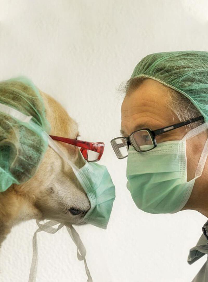 Tierpraxis Dr. Krug in Kelkheim - Chirurgie