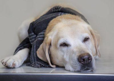 Hund müde - Tierarzt Kelkheim